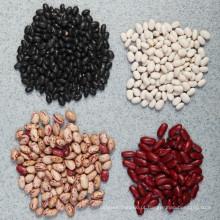 2015 New Crop chinês feijão-roxo