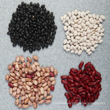2015 New Crop Chinese Kidney Beans