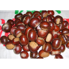 FRESH CHESTNUT NEW CROP WITH GOOD QUALITY