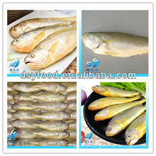 FROZEN YELLOW CROAKER FISH(SEAFOOD)