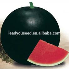 MW02 Hei semillas de sandía híbrida de corteza negra redonda en semillas de melón