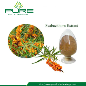 Natural Sea Buckthorn Fruit Extract Flavonoids Powder