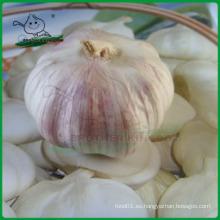 Ajo fresco chino / Ajo blanco normal / Ajo Jinxiang