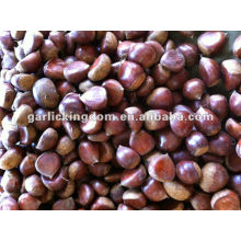 New Crop Dandong Fresh Chestnut