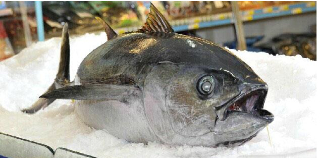 Whole Round Sea Frozen Big Eye Tuna