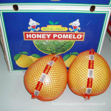 New Crop Fresh Honey Pomelo