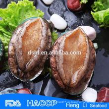 Abalone original con el proveedor de la cáscara