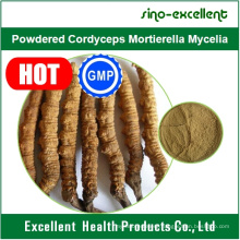 Powdered Cordyceps Mortierella Mycelia, Cordyceps Extract