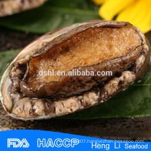 Fresh live frozen abalone