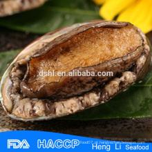Frutos do mar excelente fresco abalone