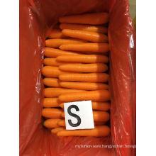 New Crop Class 1 China Shandong Xiamen Fresh Carrot