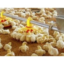 Wholesale Poultry Chicken Feeder Pan