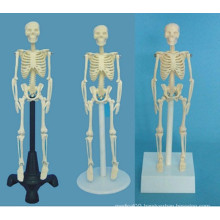 Medical Teaching Human Skeletal System Model (R020203)