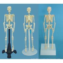 Instrumento médico modelo do sistema esquelético humano (R020203)