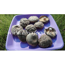 Stemless Glatte getrocknete Shiitake Pilz