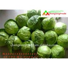 Runde kleine chinesische grüne Flachkohl