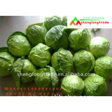 round small chinese green flat cabbage