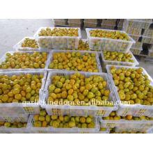Vendez la mandarine fraîche de 2011