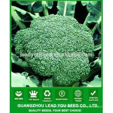 NBR021 Senme Guangzhou brocolli graines société, graines à vendre