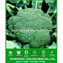 NBR021 компании Senme брокколи семена Гуанчжоу, семена для продажи