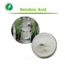 Extrait d'écorce de bouleau de haute qualité Acide bétulinique pur