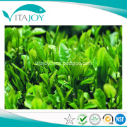 Organic Green Tea Extract