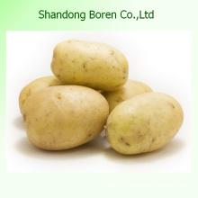 Le Sirven La Mejor Patata De Calidad en China