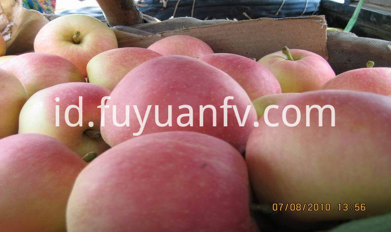 fresh gala apple