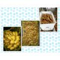 Wholesale organic fresh ginger