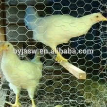Malha de arame de galinha Filipinas