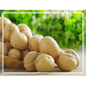 High Quality Bulk Walnut in Shell