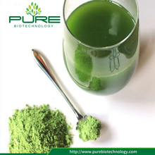 Organic Barley grass juice extract powder