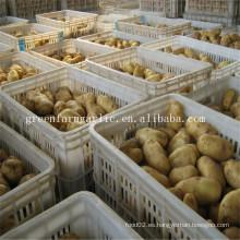Precio fresco de la patata de Holanda