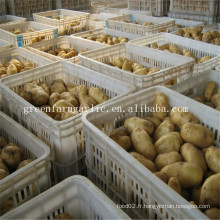 Prix frais de la pomme de terre de Hollande