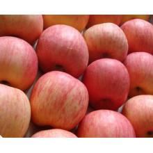 2016 Frisch FUJI Apfel