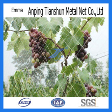 Plastic Fiber Anti Bird Netting (TS-E119)