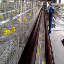 Broiler Chickens Eggs Poultry Layer Cage Breeding Industry Farm Money