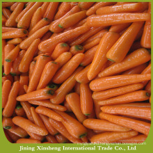 Chinese organic fresh carrot price