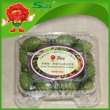 Fresh GREEN TOMATO
