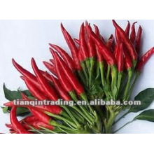 fresh red chilli seller