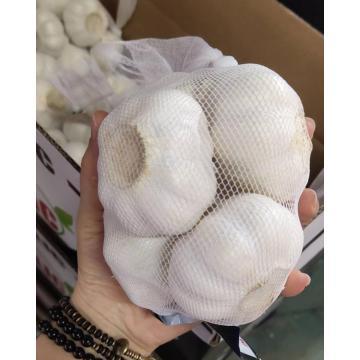 2020 New Crop Coldroom White Garlic