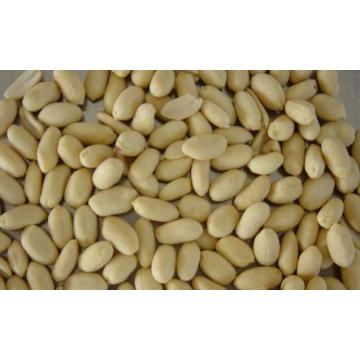 Hohe Qualität für Blanchierte Erdnuss