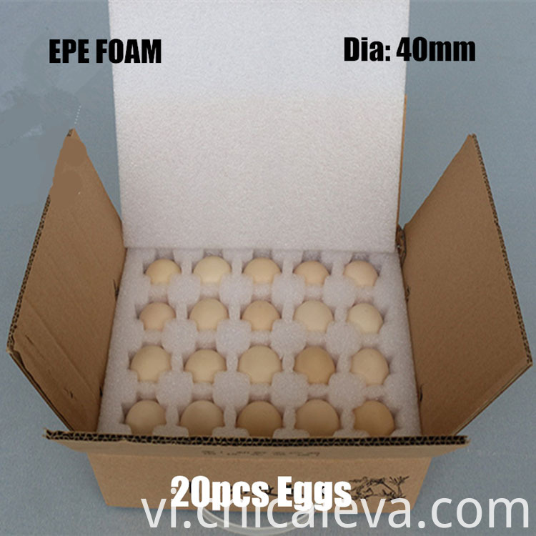 EPE egg tray (4)