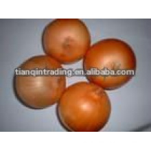 red onion exporter
