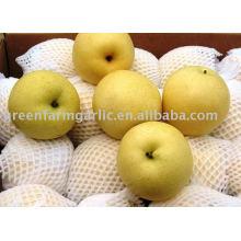 fresh Chinese shandong pear