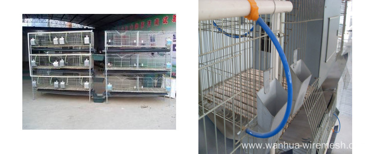Meat rabbit breeding cages