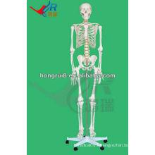 Squelette humain modèle os de squelette humain de 180 cm