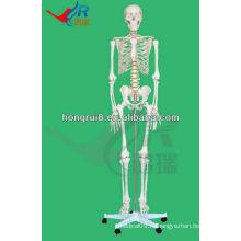 Модель человеческого скелета 180 см человеческих скелетных костей