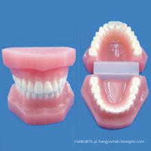 Modelo de enfermagem anatômica de dente natural de tamanho natural (R080111)