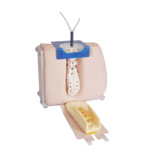 Advanced Medical Lumbar Puncture Training Equipment Model